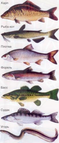 название рыб с фото разделе фотообои Карты